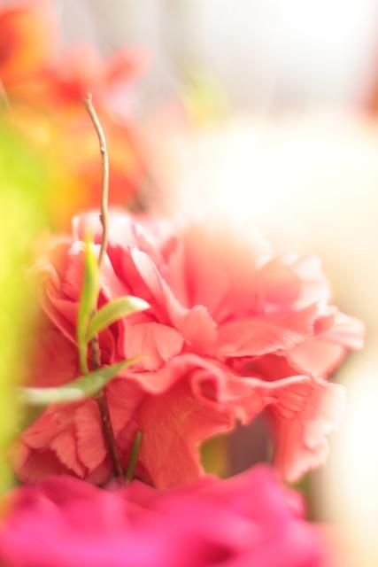 IMG_3783花