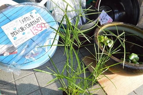 注水植物 (2)