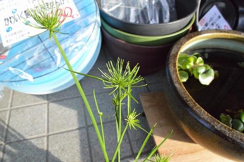 注水植物 (1)