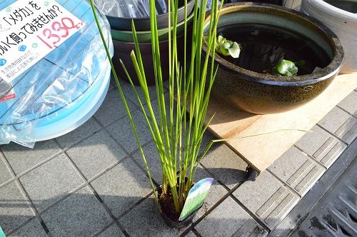 注水植物 (5)
