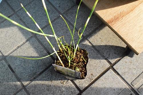 注水植物 (4)