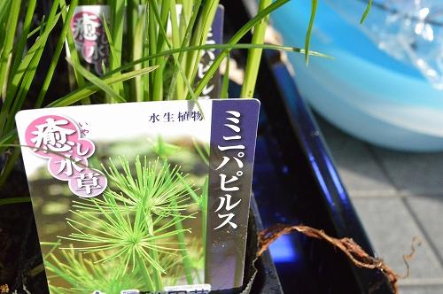注水植物 (9)