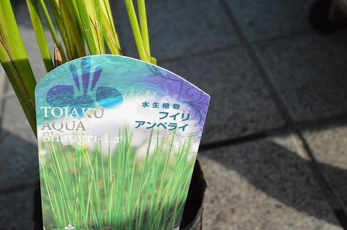 注水植物 (6)
