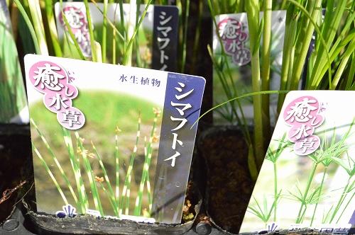注水植物 (7)
