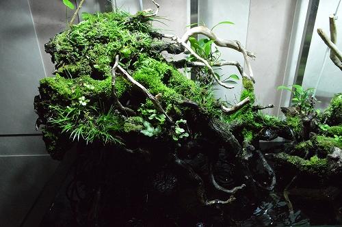 注水植物 (15)