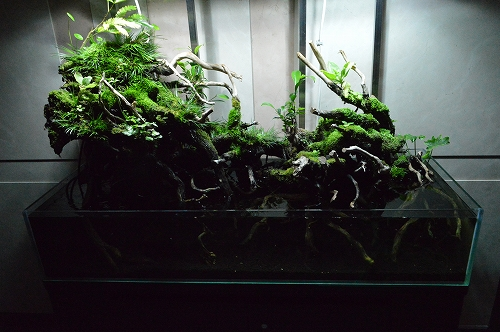 注水植物 (13)