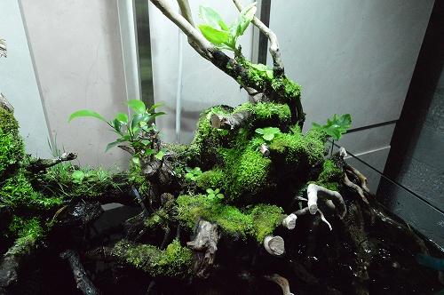 注水植物 (16)