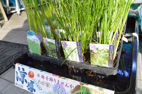 注水植物 (18)