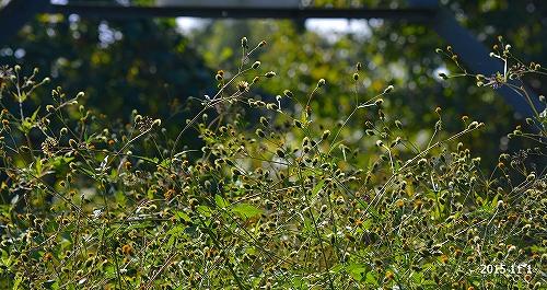s-秋の花20151101