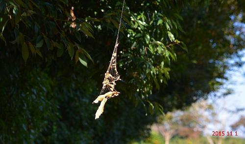 s-蜘蛛の巣ハンモック20151101