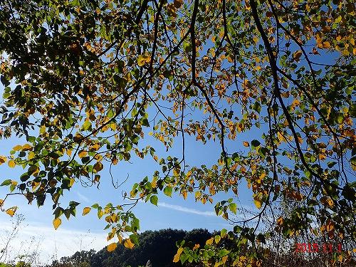 s-葉裏から見る秋②20151101