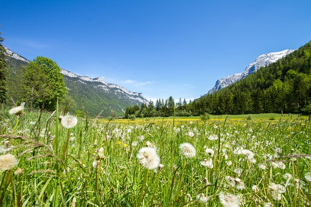 meadow-427227_640.jpg