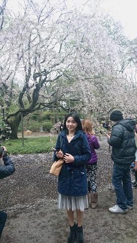 六義園すだれ桜1harulinaa