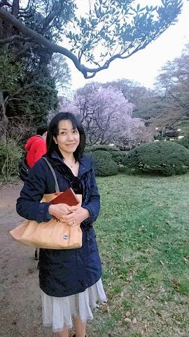 六義園園内からのすだれ桜