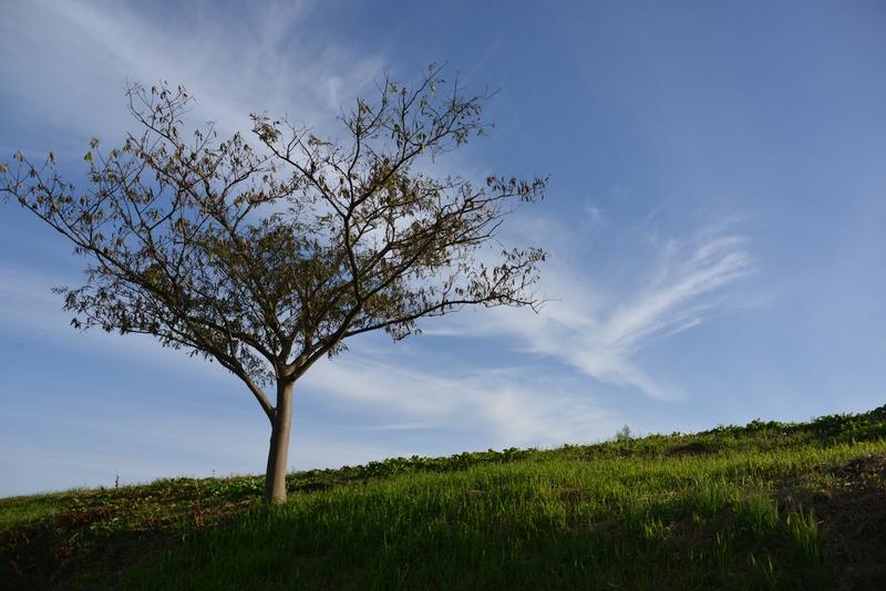 秋空の木-2