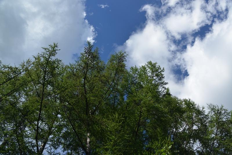 秋空の木-3