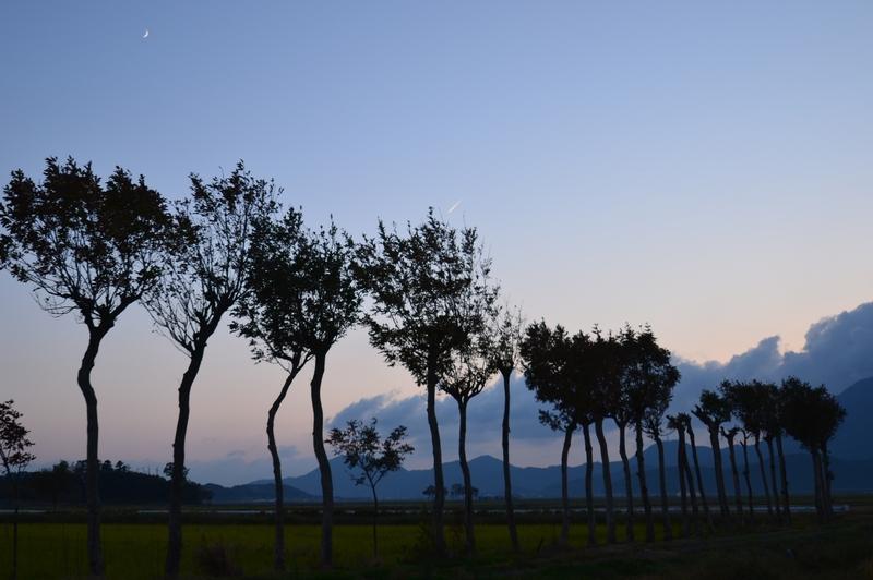 はざ木の夕暮れ-4