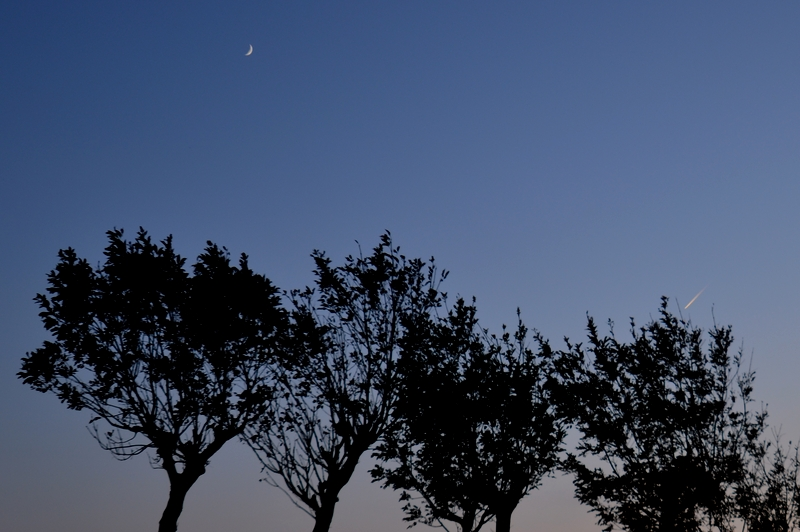 はざ木の夕暮れ-5