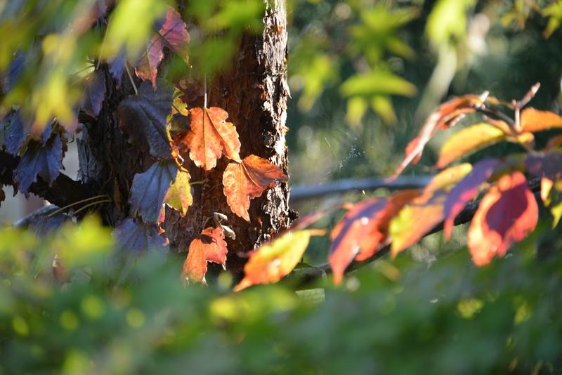 秋晴れの日-1