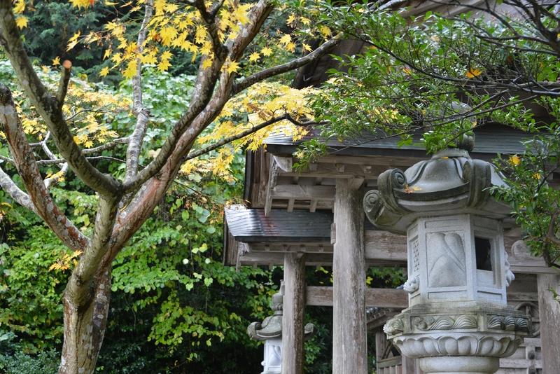 十月末の種月寺-1