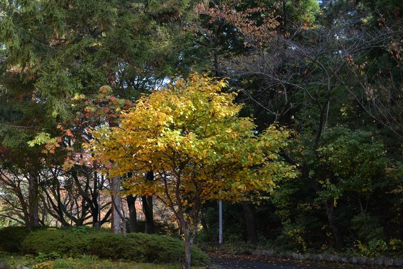 秋の一日-5