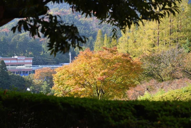 秋の一日-2