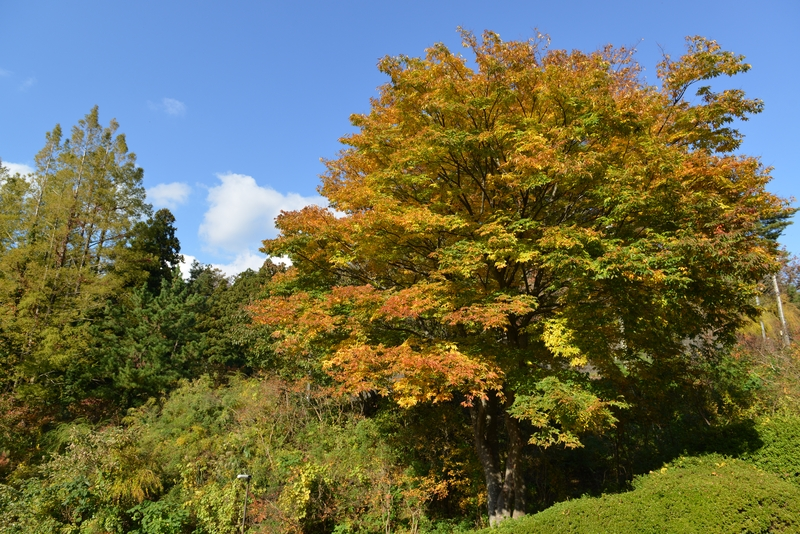 秋の一日-4