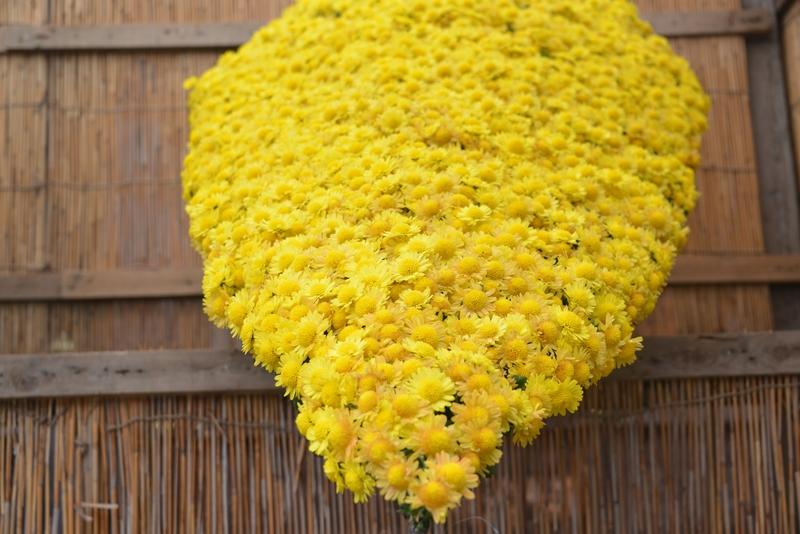 菊祭り-2