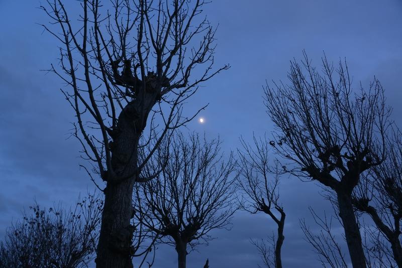 月とはざ木-1
