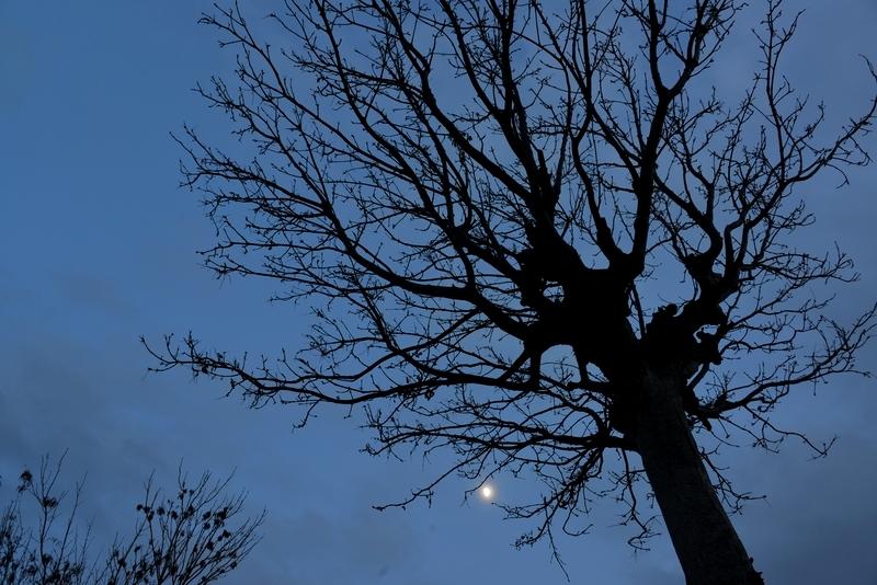 月とはざ木-2