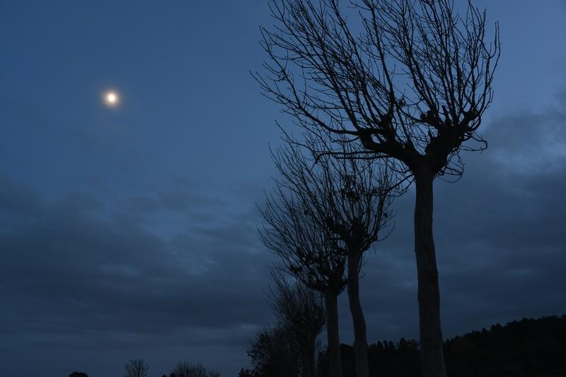 月とはざ木-3