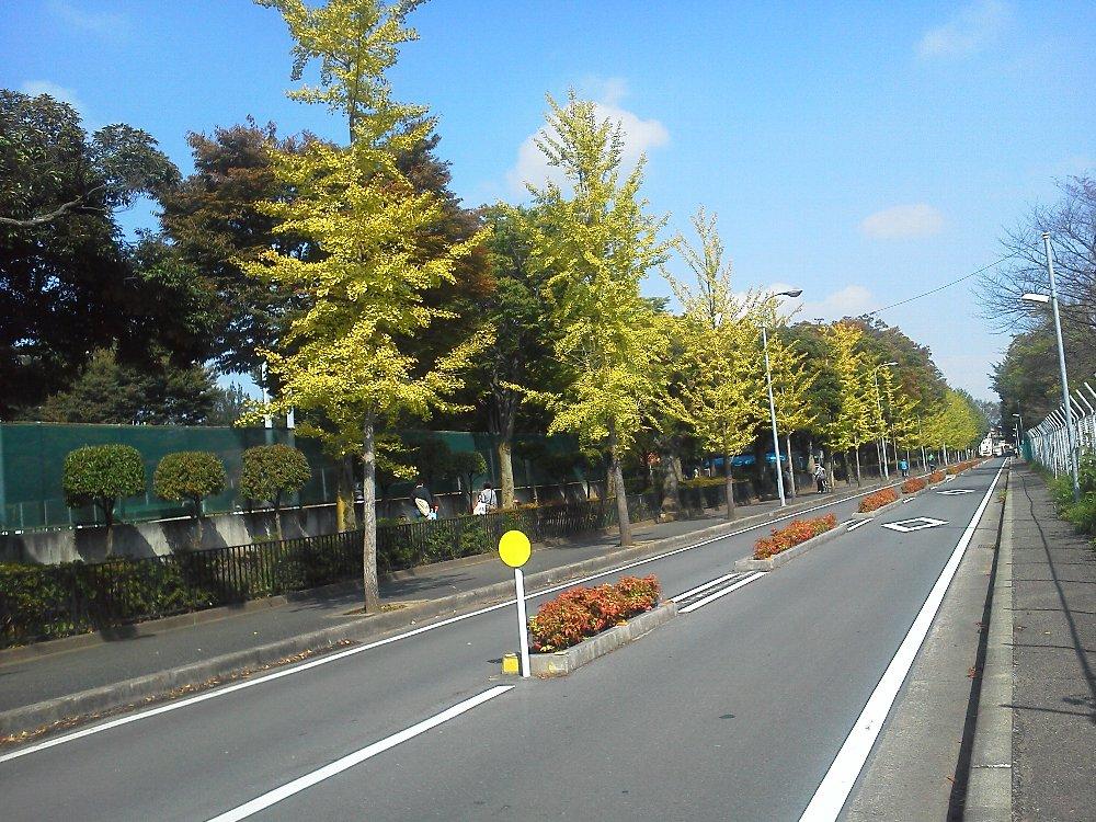 F1000037青葉台公園横イチョウ並木