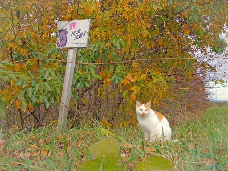 吾妻山麓 地域猫