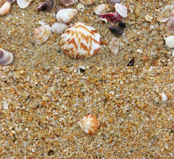 20160403ビーチコーミング16