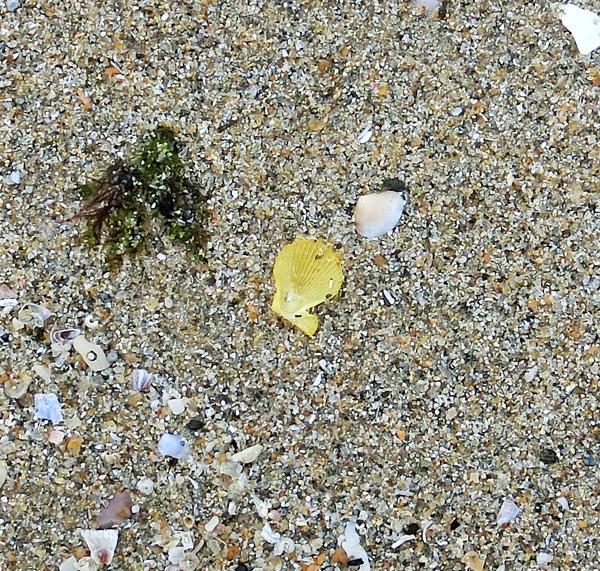 20160403ビーチコーミング25