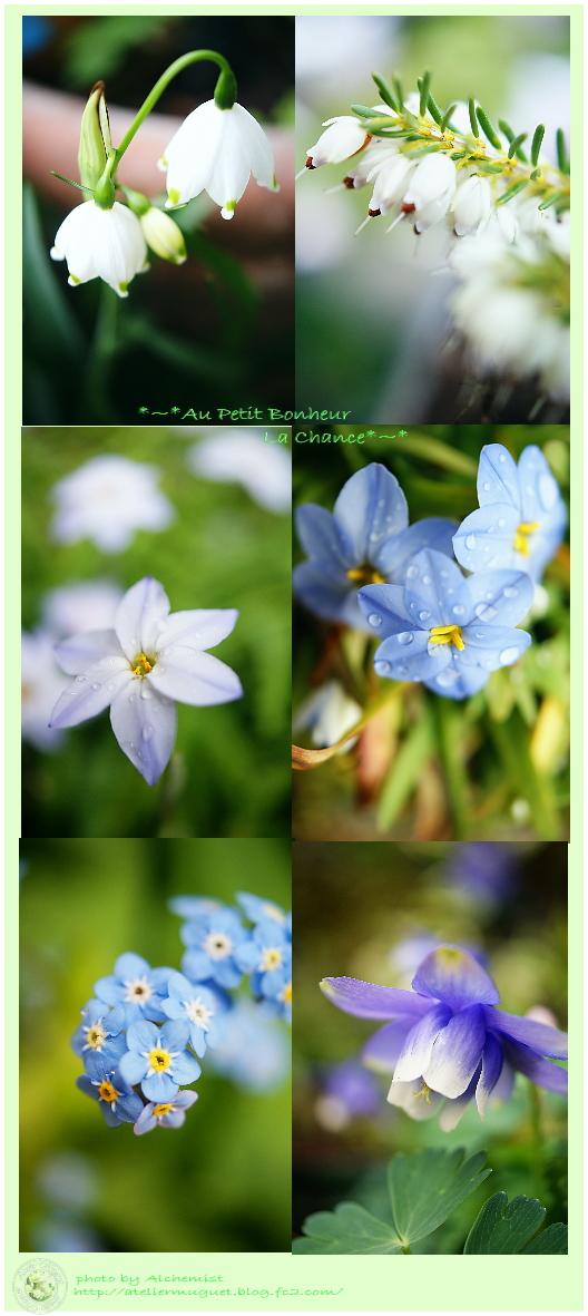 g4-bluewhite.jpg