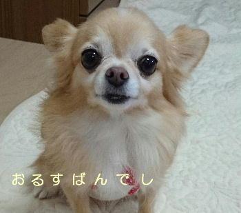 blog2015110601.jpg
