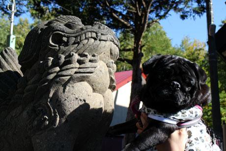 狛犬さんと苺ん★