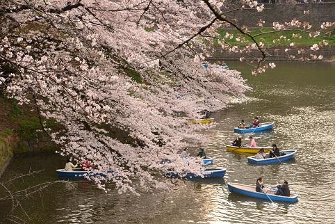 桜渋滞DSC_8782
