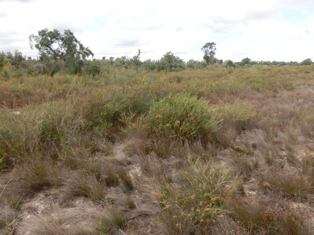 10:3Alison Baird reserve