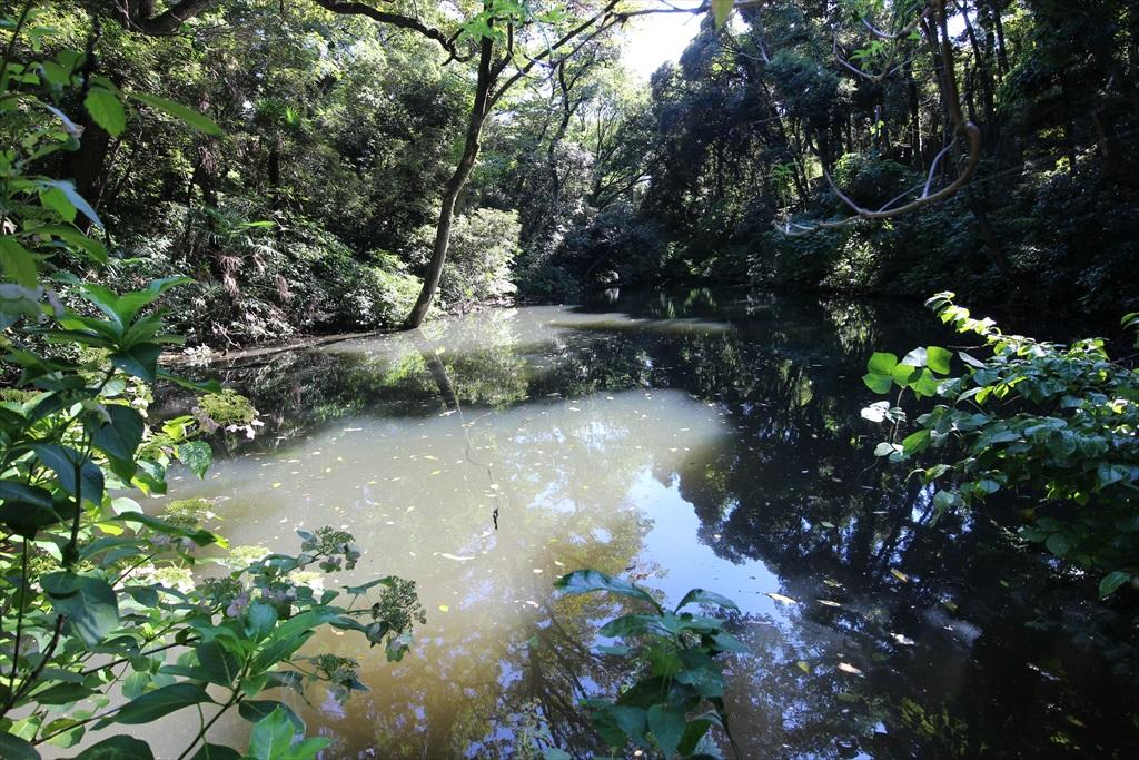 水鳥の池_1