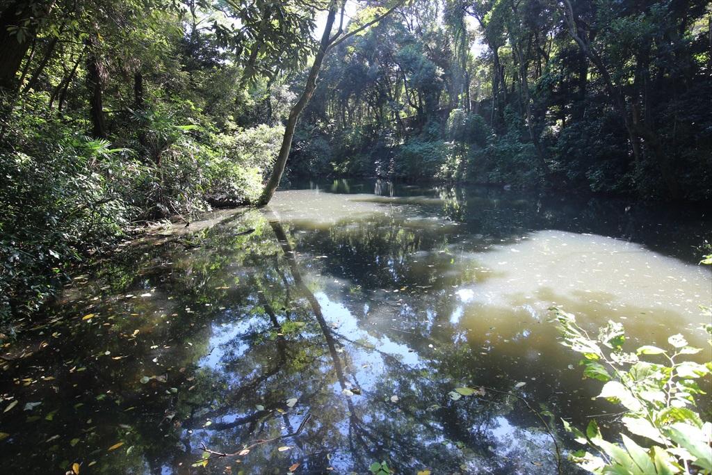 水鳥の池_2