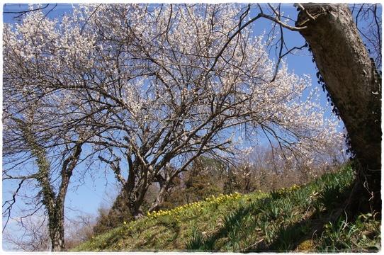 fukujyusou12.jpg