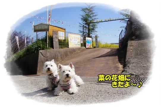 nanohana_20160322202232c11.jpg