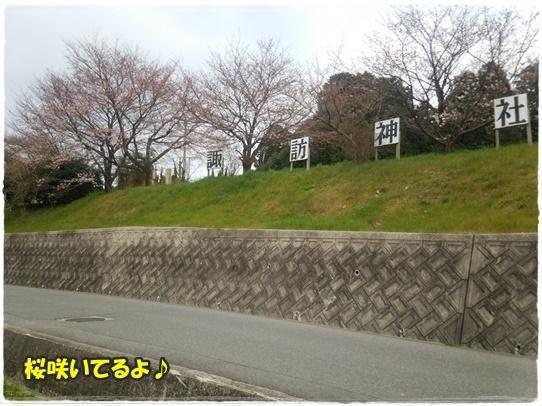sakura_201604102204448fa.jpg