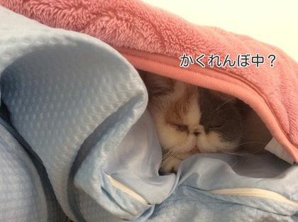 お布団の間で可愛い~!かくれんぼ!