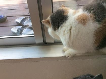 窓を開けたいあずき