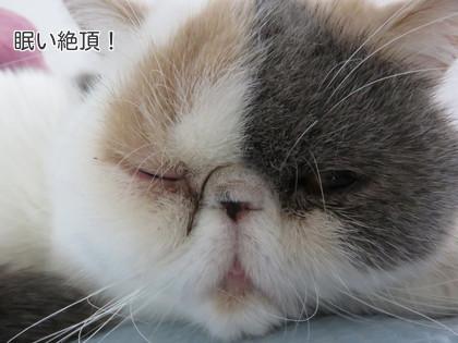 片目しかあけられないほど眠い