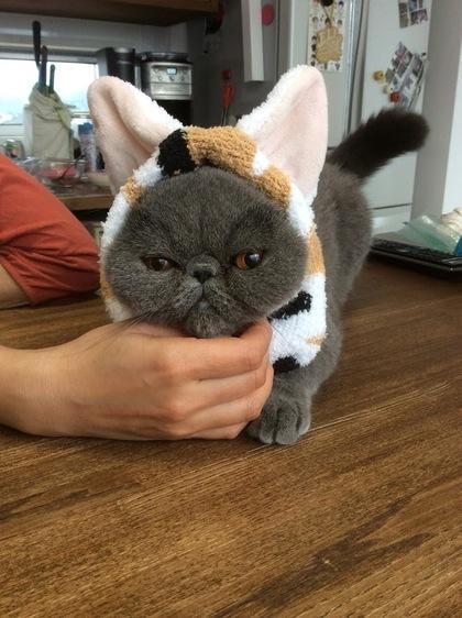 へいちゃんに猫ヘアーバンドをかけてみる