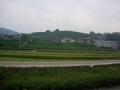 151010茶畑の遠景